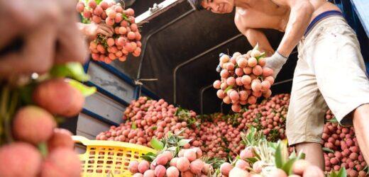 Giao thương trực tuyến doanh nghiệp Việt Nam – Nhật Bản: Thêm cơ hội cho hàng Việt xuất khẩu
