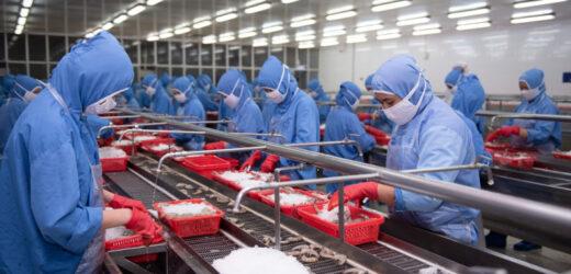 Doanh nghiệp thủy sản bức xúc vì bị đánh đồng với vựa lặt đầu tôm