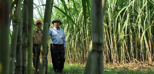 Việt Nam điều tra đường mía nhập khẩu từ Thái Lan