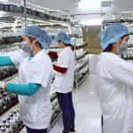 Tiền Giang: Ứng dụng khoa học và công nghệ vào khâu sản xuất, chế biến, tiêu thụ trái cây