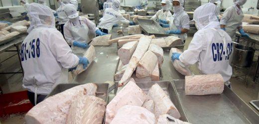 Trong 6 tháng đầu năm 2021, xuất khẩu cá ngừ đạt 355 triệu USD