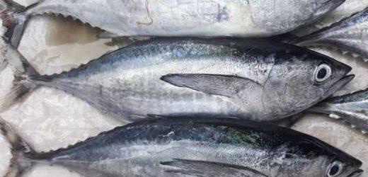 Việt Nam vượt qua Thái Lan trở thành nước xuất khẩu cá ngừ lớn nhất vào Israel